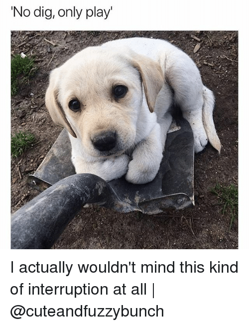 Memes, Mind, and 🤖: 'No dig, only play' I actually wouldn't mind this kind of interruption at all | @cuteandfuzzybunch