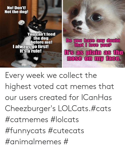 LOLcats: No! Don't!  Not the dog!  Youcan't feed  the dog  before me!  l always go first!  It's a rule!  Do you have any doub  that I love you?  Irs as platn as the  a106401  may 2019 Every week we collect the highest voted cat memes that our users created for ICanHas Cheezburger's LOLCats.#cats #catmemes #lolcats #funnycats #cutecats #animalmemes #