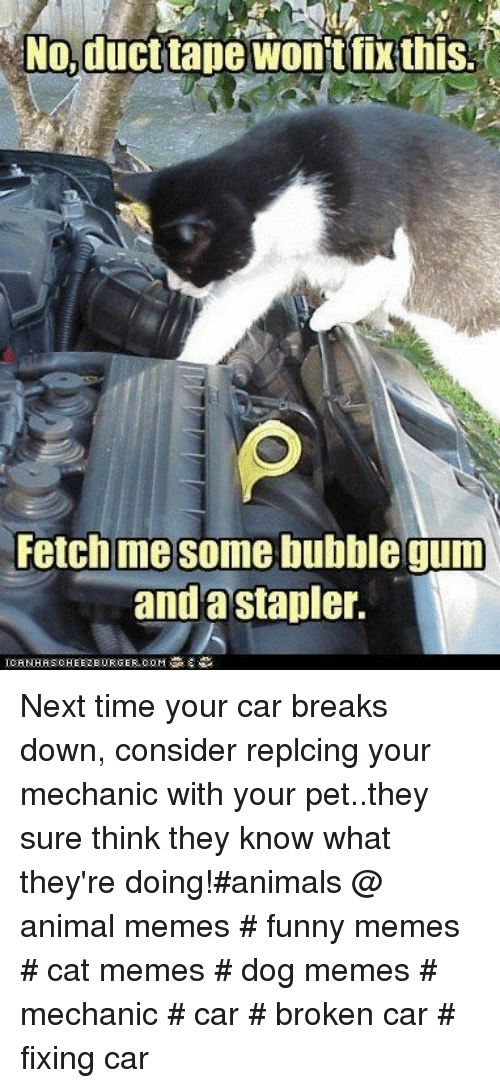 stapler: No,ducttape wonit fix this  Fetch me some bubble gum  anda stapler. Next time your car breaks down, consider replcing your mechanic with your pet..they sure think they know what they're doing!#animals @ animal memes # funny memes # cat memes # dog memes # mechanic # car # broken car # fixing car