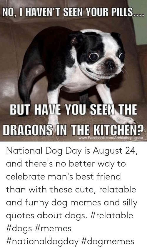 Silly Quotes: NO, I HAVEN'T SEEN YOUR PILLS...  BUT HAVE YOU SEEN THE  DRAGONS IN THE KITCHEN?  www.Facebook.com/Archiethepugstar National Dog Day is August 24, and there's no better way to celebrate man's best friend than with these cute, relatable and funny dog memes and silly quotes about dogs.  #relatable #dogs #memes #nationaldogday #dogmemes