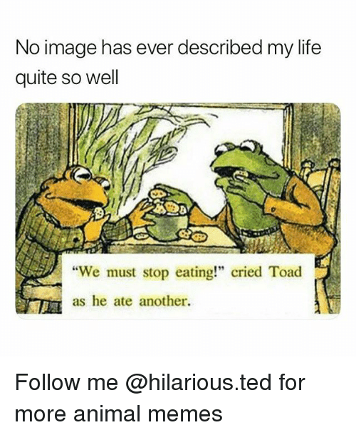 """Funny, Life, and Memes: No image has ever described my life  quite so well  We must stop eating"""" cried Toad  as he ate another. Follow me @hilarious.ted for more animal memes"""