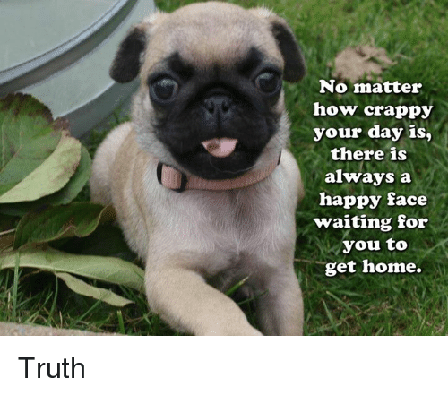 Memes, Happy, and Home: No matter  how crappy  your day is,  there is  always a  happy face  waiting for  you to  get home. Truth