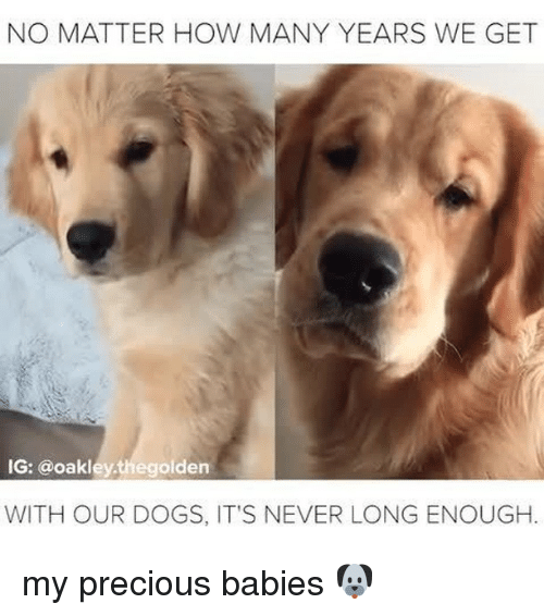 how-many-years: NO MATTER HOW MANY YEARS WE GET  IG: @oakleythegolden  WITH OUR DOGS, IT'S NEVER LONG ENOUGH. my precious babies 🐶