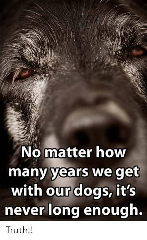 how-many-years: No matter how  many years we get  with our dogs, it's  never long enough. Truth!!