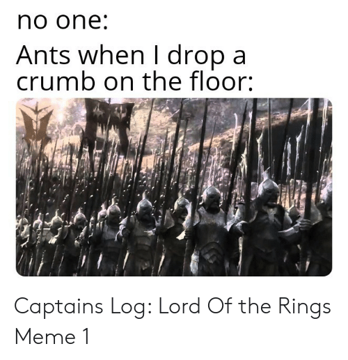 Ants: no one  Ants when I dropa  crumb on the floor: Captains Log: Lord Of the Rings Meme 1