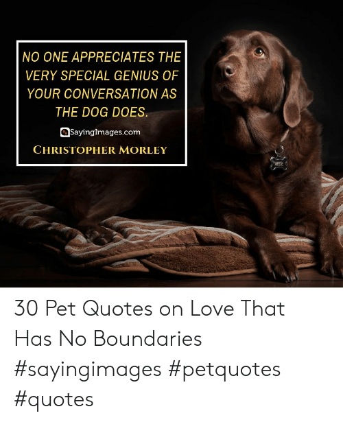 allie: NO ONE APPRECIATES THE  VERY SPECIAL GENIUS OF  YOUR CONVERSATION AS  THE DOG DOES.  Sayinglmages.com  CHRISTOPHER MORLEY  ALLIE 30 Pet Quotes on Love That Has No Boundaries #sayingimages #petquotes #quotes
