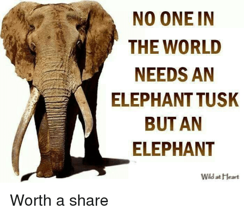 Tusk: NO ONE IN  THE WORLD  NEEDS AN  A ELEPHANT TUSK  BUT AN  ELEPHANT  Wld at Heart Worth a share