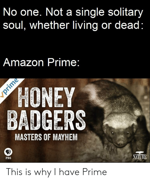honey badgers: No one. Not a single solitary  soul, whether living or dead:  Amazon Prime:  HONEY  BADGERS  MASTERS OF MAYHEM  NAVTURE  PBS  prime This is why I have Prime
