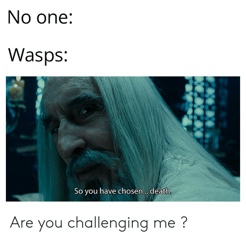 wasps: No one:  Wasps:  So you have chosen.. death. Are you challenging me ?