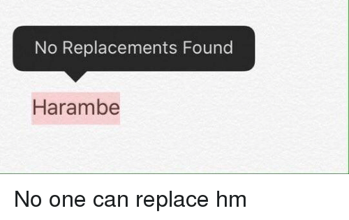 SIZZLE: No Replacements Found  Harambe No one can replace hm