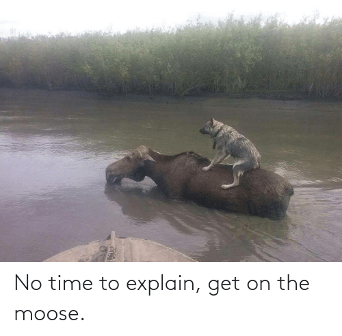 moose: No time to explain, get on the moose.