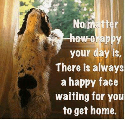 happy face: No  tter  how crappy  your day is,  There is always  a happy face  waiting for you  to get home.