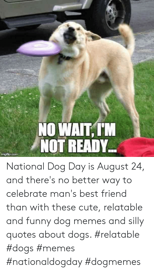 Silly Quotes: NO WAIT,IM  NOT READY  Imgfip.com National Dog Day is August 24, and there's no better way to celebrate man's best friend than with these cute, relatable and funny dog memes and silly quotes about dogs.  #relatable #dogs #memes #nationaldogday #dogmemes