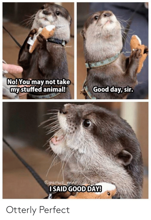 Otterly: No! You may not take  mystuffed animal!  Good day, sir.  Oparus m  OSAID GOOD DAY! Otterly Perfect