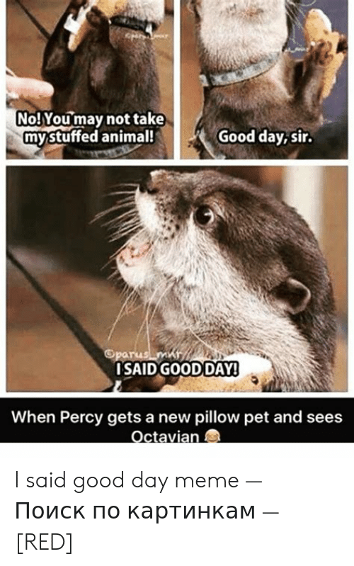 I Said Good Day Meme: No! Youmay not take  mystuffed animal!  Good day, sir.  Oparus m  ISAIDGOODDAY!  When Percy gets a new pillow pet and sees  Octavian I said good day meme — Поиск по картинкам — [RED]