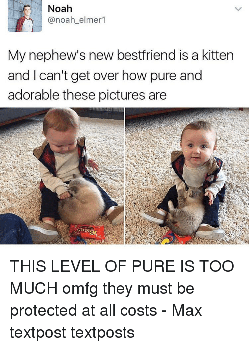 Noah: Noah  @noah elmer  My nephew's new bestfriend is a kitten  and can't get over how pure and  adorable these pictures are THIS LEVEL OF PURE IS TOO MUCH omfg they must be protected at all costs - Max textpost textposts