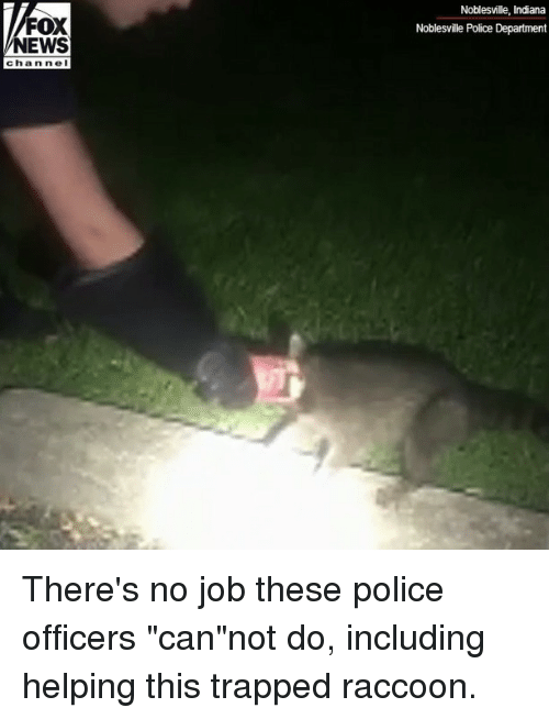 "Memes, News, and Police: Noblesville, Indiana  Noblesville Police Department  FOX  NEWS  chan nel There's no job these police officers ""can""not do, including helping this trapped raccoon."