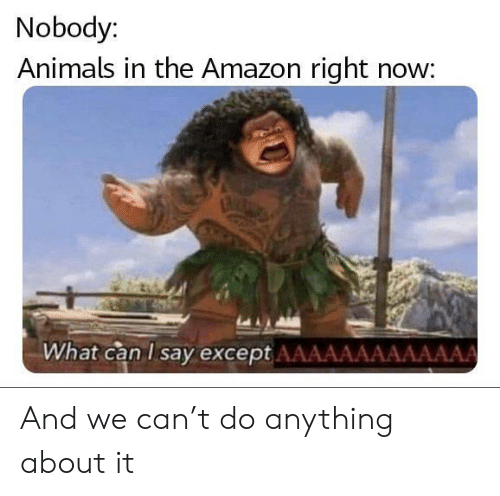 now what: Nobody:  Animals in the Amazon right now:  What can I say except AAAAAAAAAAAAA And we can't do anything about it