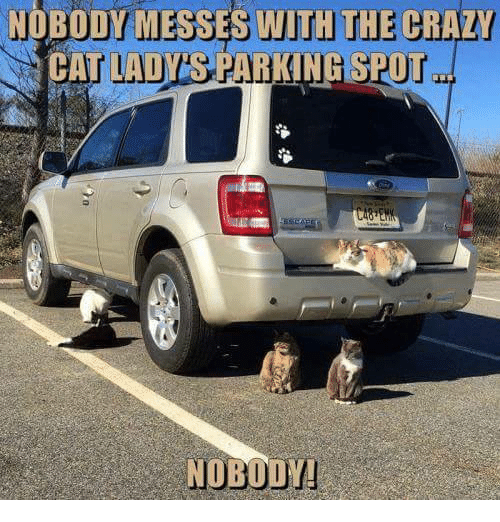 crazy cats: NOBODY MESSES WITH THE CRAZY  CAT LADYS PARKING SPOT
