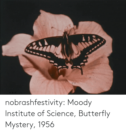 Mystery: nobrashfestivity:    Moody Institute of Science, Butterfly Mystery, 1956