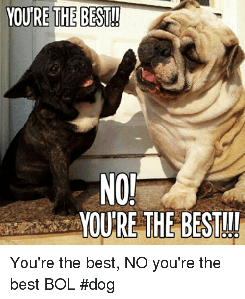 Memes, Best, and 🤖: NOJ  MOURE THE BEST You're the best, NO you're the best   BOL  #dog