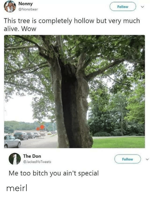The Don: Nonny  Follow  @Nonsibear  This tree is completely hollow but very much  alive. Wow  The Don  Follow  @JackedYoTweets  Me too bitch you ain't special meirl