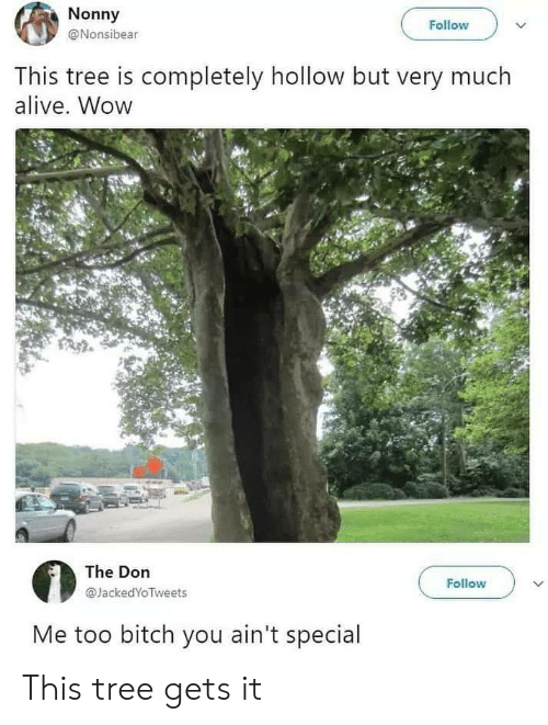 The Don: Nonny  Follow  @Nonsibear  This tree is completely hollow but very much  alive. Wow  The Don  Follow  @JackedYoTweets  Me too bitch you ain't special This tree gets it