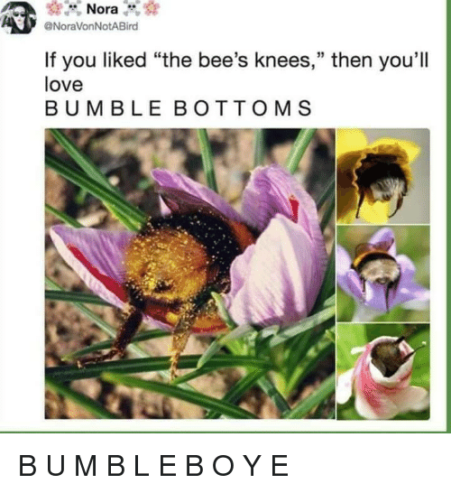 "bees knees: Nora  @NoraVonNotABird  If you liked ""the bee's knees,"" then you'll  love  BUMBLE BOTTOMS B U M B L E B O Y E"