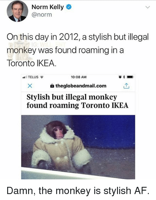 Norm Kelly: Norm Kelly  @norm  On this day in 2012,a stylish but illegal  monkey was found roaming in a  Toronto IKEA.  11 TELUS  10:08 AM  a theglobeandmail.com  Stylish but illegal monkey  found roaming Toronto IKEA Damn, the monkey is stylish AF.