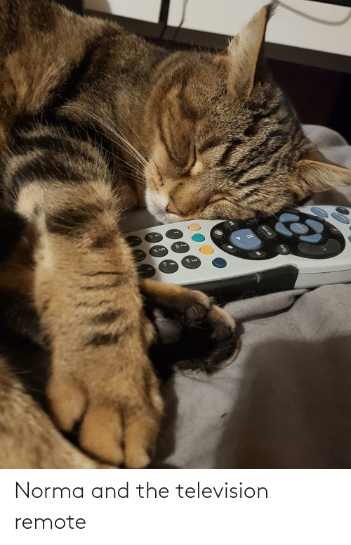 Television: Norma and the television remote