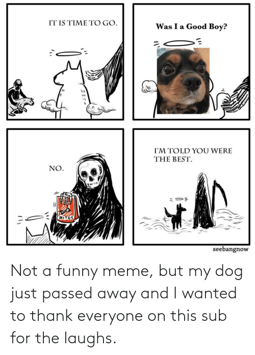 sub: Not a funny meme, but my dog just passed away and I wanted to thank everyone on this sub for the laughs.