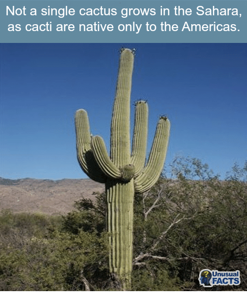 america the unusual Anything america | see more ideas about canada, mount lemmon and beautiful places anything america anything america pinterest america, the unusual.