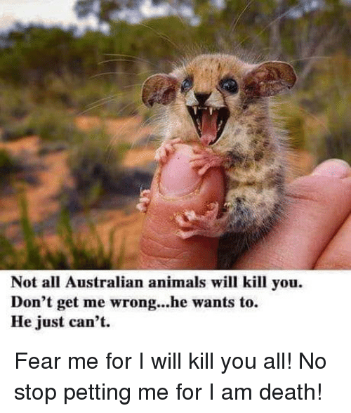 I Will Kill You: Not all Australian animals will kill you  Don't get me wrong...he wants to.  He just can't. Fear me for I will kill you all! No stop petting me for I am death!