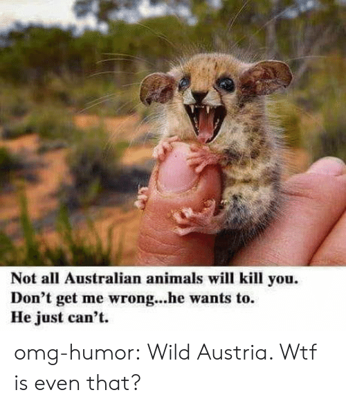 Austria: Not all Australian animals will kill you.  Don't get me wrong...he wants to.  He just can't omg-humor:  Wild Austria. Wtf is even that?
