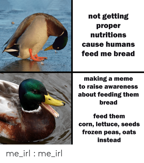 oats: not getting  proper  nutritions  cause humans  feed me bread  making a meme  to raise awareness  about feeding them  bread  feed them  corn, lettuce, seeds  frozen peas, oats  instead  @der.leong me_irl : me_irl