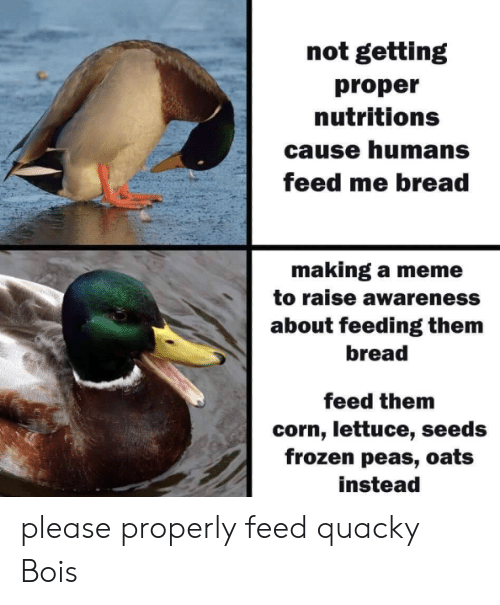 lettuce: not getting  proper  nutritions  cause humans  feed me bread  making a meme  to raise awareness  about feeding them  bread  feed them  corn, lettuce, seeds  frozen peas, oats  instead please properly feed quacky Bois​
