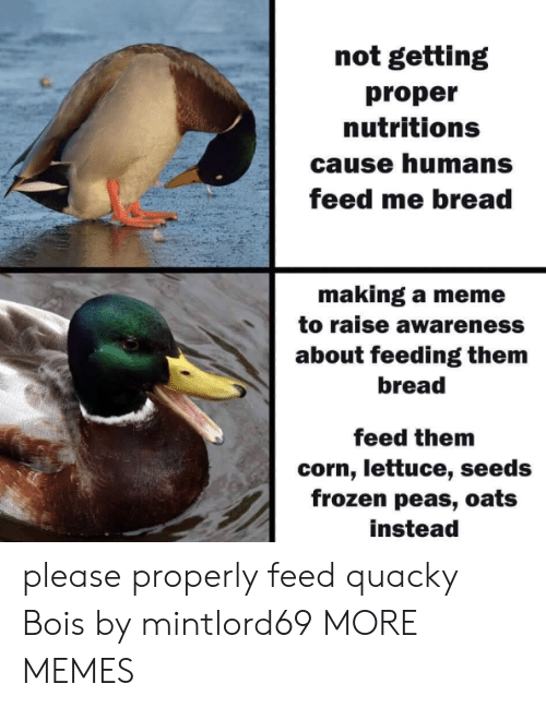 lettuce: not getting  proper  nutritions  cause humans  feed me bread  making a meme  to raise awareness  about feeding them  bread  feed them  corn, lettuce, seeds  frozen peas, oats  instead please properly feed quacky Bois​ by mintlord69 MORE MEMES