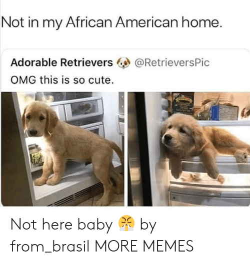 african american: Not in my African American home.  Adorable Retrievers  OMG this is so cute.  @RetrieversPic Not here baby 😤 by from_brasil MORE MEMES