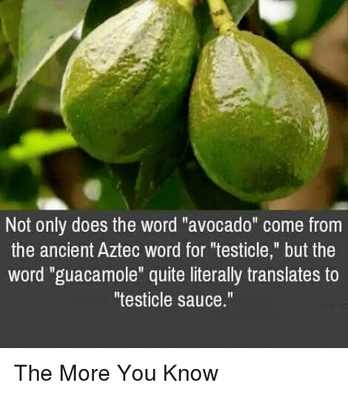 "Aztec: Not only does the word ""avocado"" come from  the ancient Aztec word for ""testicle,"" but the  word ""guacamole"" quite literally translates to  testicle sauce."" The More You Know"