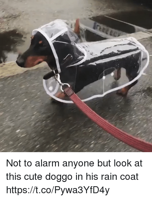 Cute, Alarm, and Rain: Not to alarm anyone but look at this  cute doggo in his rain coat https://t.co/Pywa3YfD4y