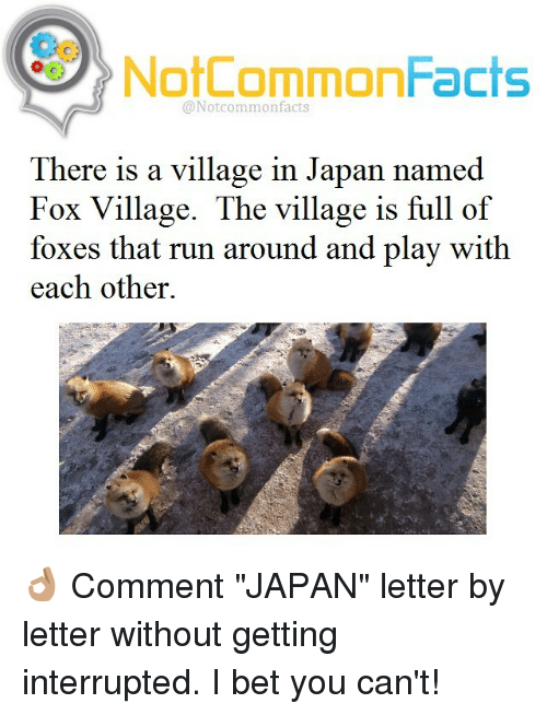 """I Bet, Memes, and Japan: NotCommonFacts  @Notcommon facts  There is a village in Japan named  Fox Village. The village is full of  foxes that run around and play with  each other. 👌🏽 Comment """"JAPAN"""" letter by letter without getting interrupted. I bet you can't!"""