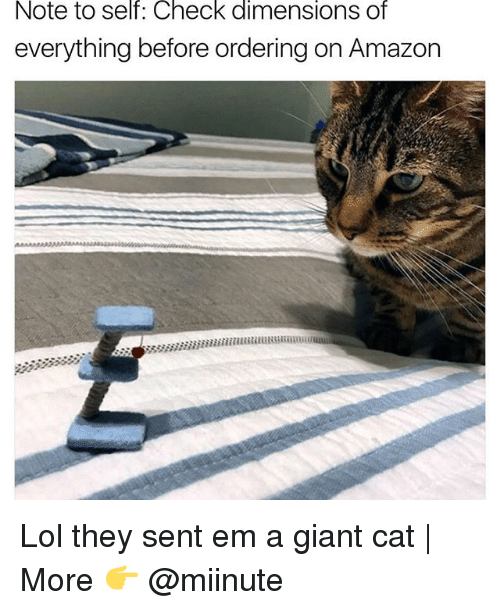 Funny, Cat, and Ems: Note to self: Check dimensions of  everything before ordering on Amazon Lol they sent em a giant cat | More 👉 @miinute