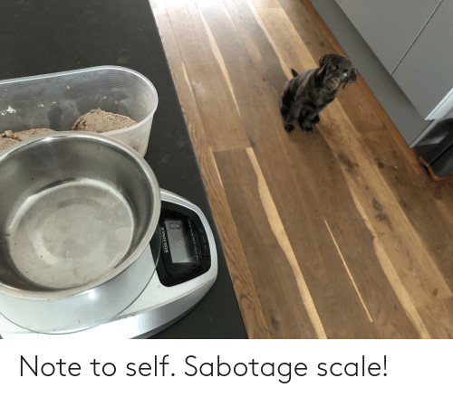 note to self: Note to self. Sabotage scale!