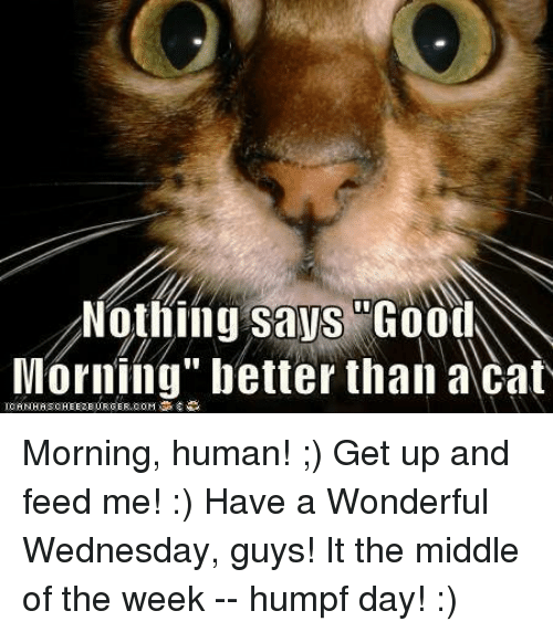 Good Morning Meme Wednesday : Best memes about have a wonderful wednesday