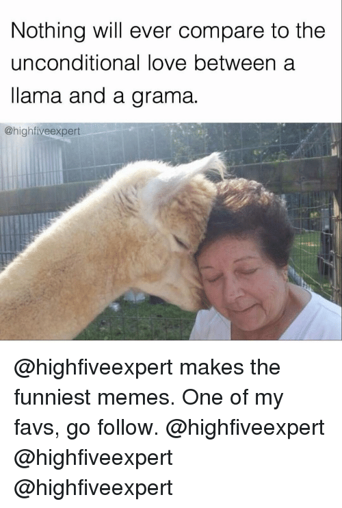 Memes, 🤖, and High Five: Nothing will ever compare to the  unconditional love between a  llama and a grama.  @high five expert @highfiveexpert makes the funniest memes. One of my favs, go follow. @highfiveexpert @highfiveexpert @highfiveexpert