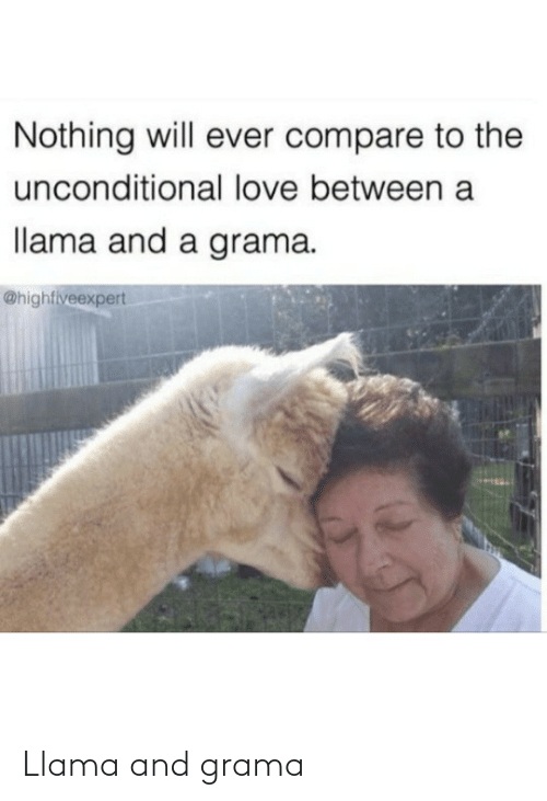 compare: Nothing will ever compare to the  unconditional love between a  llama and a grama.  @highfiveexpert Llama and grama