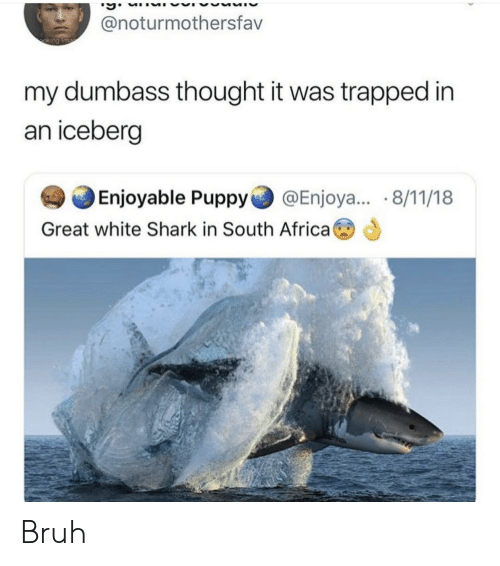 South Africa: @noturmothersfav  my dumbass thought it was trapped in  an iceberçg  Enjoyable Puppy@Enjoya... 8/11/18  Great white Shark in South Africa Bruh