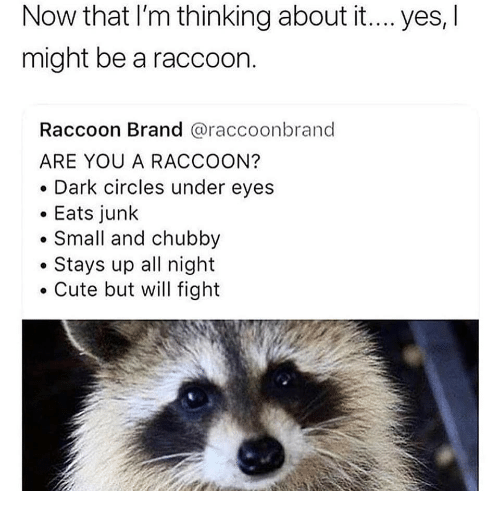 Cute, Raccoon, and Circles: Now that I'm thinking about it... yes, l  might be a raccoon.  Raccoon Brand @raccoonbrand  ARE YOU A RACCOON?  . Dark circles under eyes  Eats junk  Small and chubby  .Stays up all night  Cute but will fight
