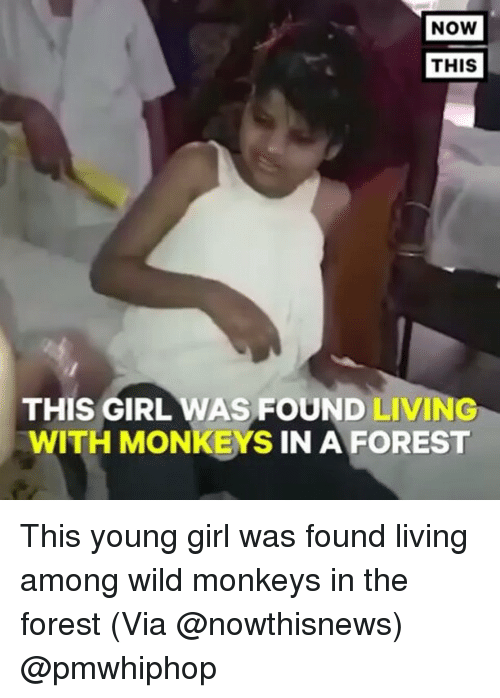 Memes, Girl, and Wild: NOW  THIS  THIS GIRL WAS FOUND  LIVING  WITH MONKEYS IN A FOREST This young girl was found living among wild monkeys in the forest (Via @nowthisnews) @pmwhiphop