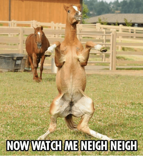 Memes, Watch Me, and Watch: NOW WATCH ME NEIGH NEIGH